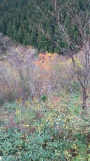 或る峠の紅葉