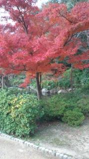 2012年の紅葉(<br />  公園にて)